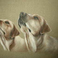 dipingere gli animali